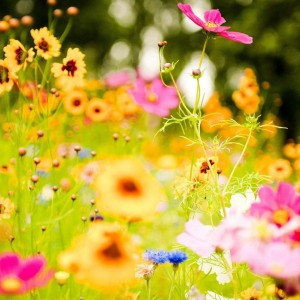 flower-meadow-20392-20902-hd-wallpapers