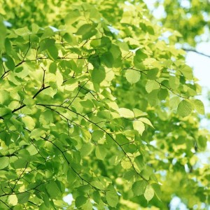 folhas-ao-sol_5619_1600x1200