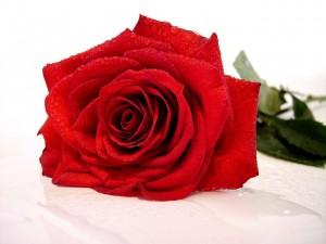 imagens-rosas-vermelhas