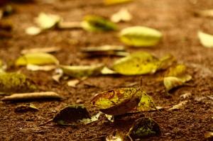 terra-molhada-e-folhas-secas